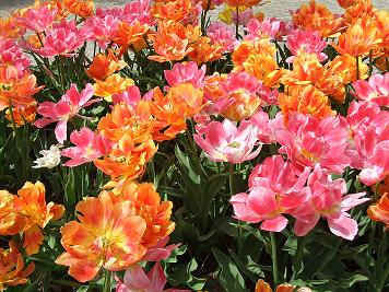 аллергия на тюльпаны симптомы у ребенка