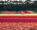 цветники и вазоны